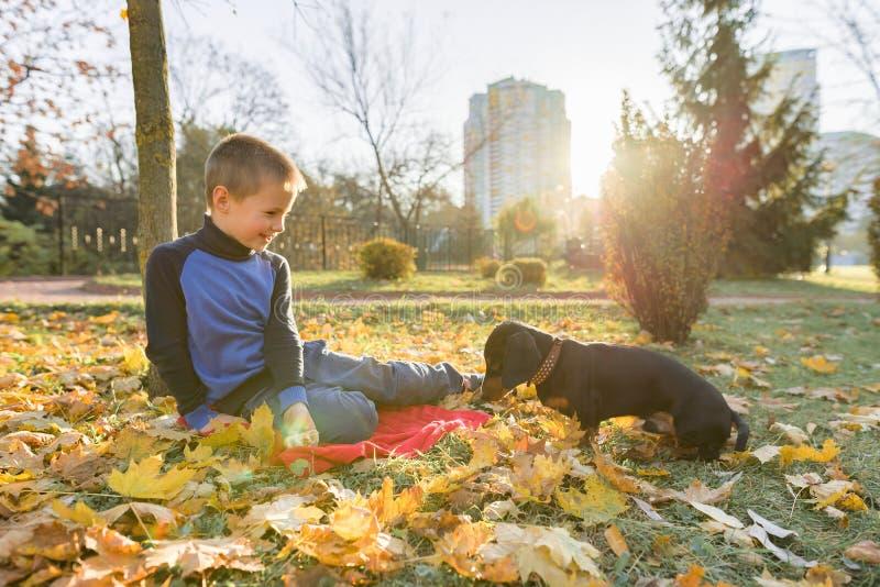 Jungenkind, das mit Dachshundhund im sonnigen Park des Herbstes spielt lizenzfreies stockfoto