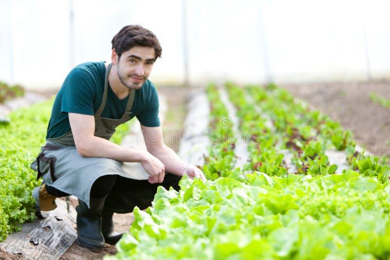 Junger attraktiver Landwirt überprüfen Fortschritt der Kultur stockbild