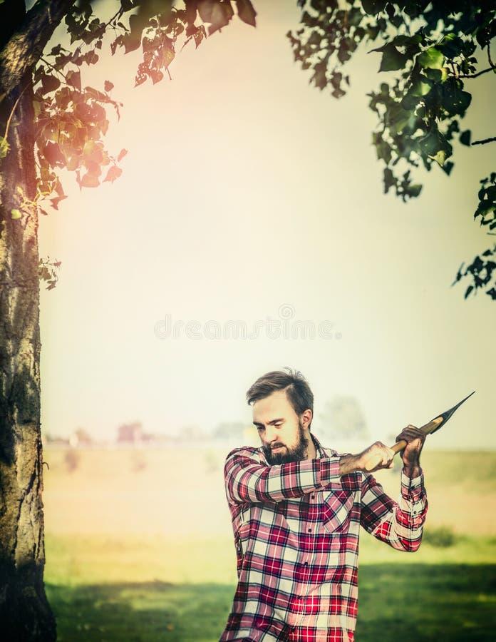 Junger bärtiger Holzfäller mit Axtdarm ein Baum auf Sommernaturhintergrund stockfotografie