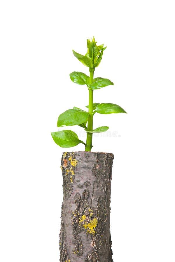 Junger Baum vektor abbildung