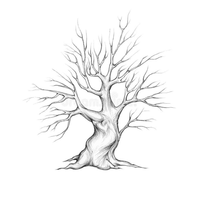 Junger Baum mit Herzen lizenzfreie abbildung