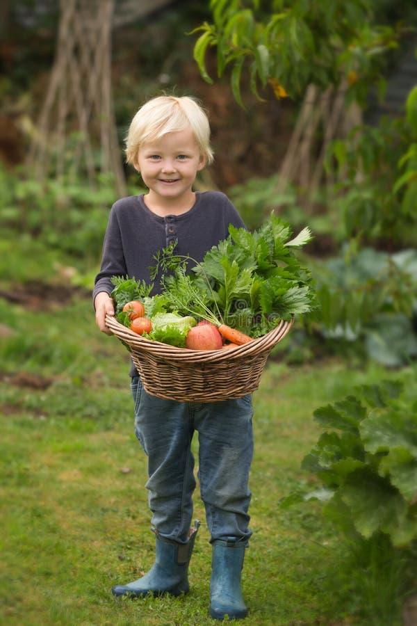 Junger blonder Gärtner führt stolz seine Ernte vor stockfotos