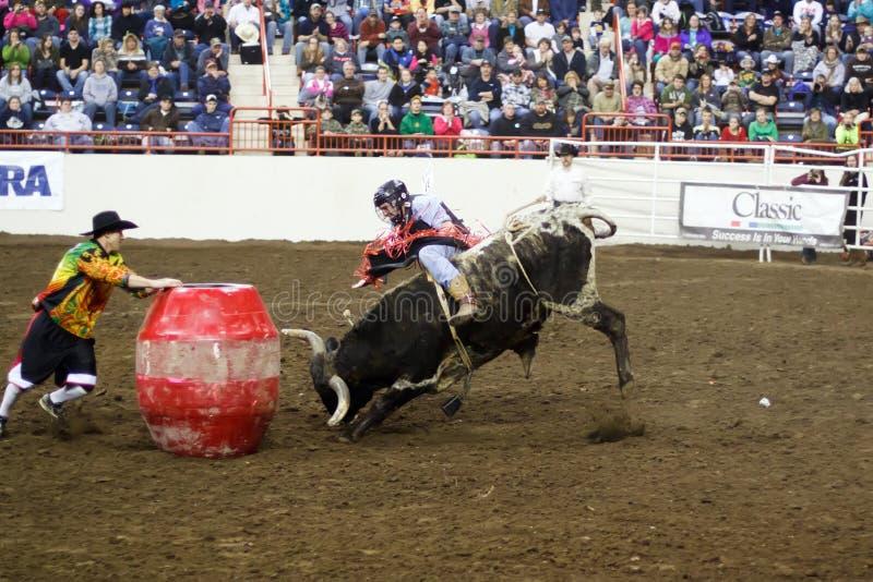 Junger Bull-Reiter stockbilder