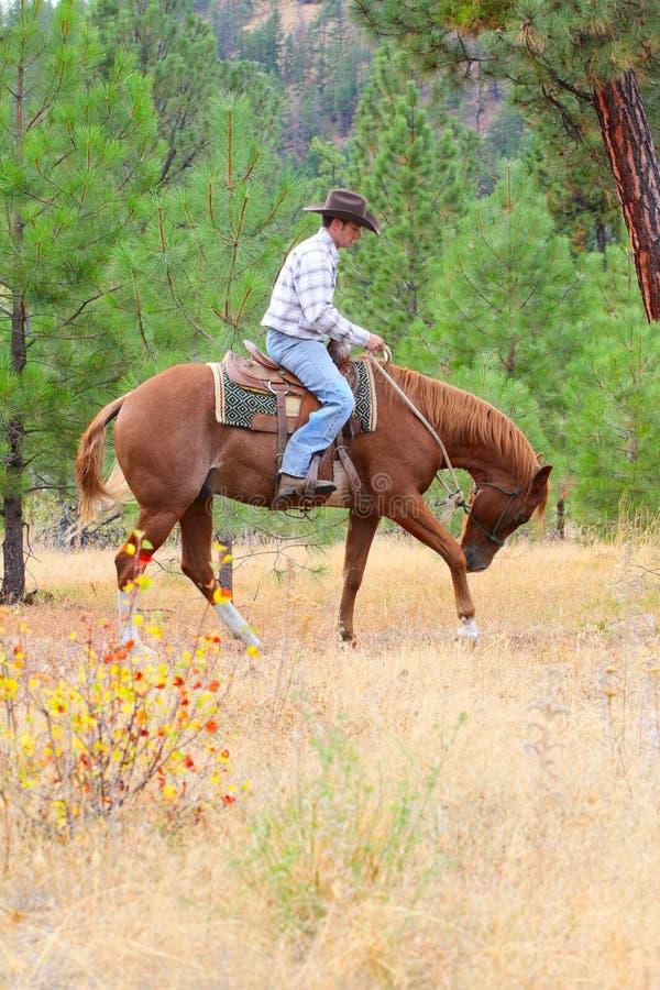 Junger Cowboy stockfoto