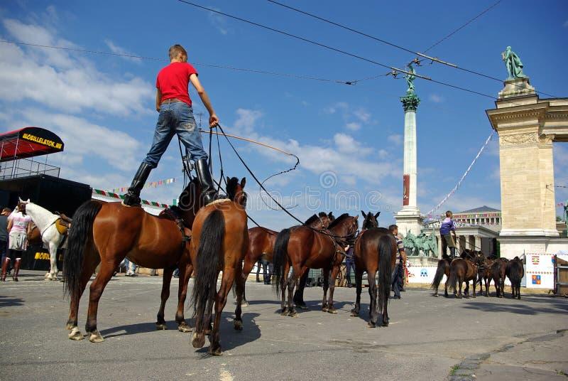 Junger Cowboy auf Pferden lizenzfreie stockfotos