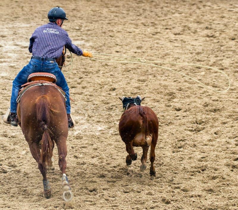 Junger Cowboy, der ein Kalb in der Rodeoshow roping ist stockbild