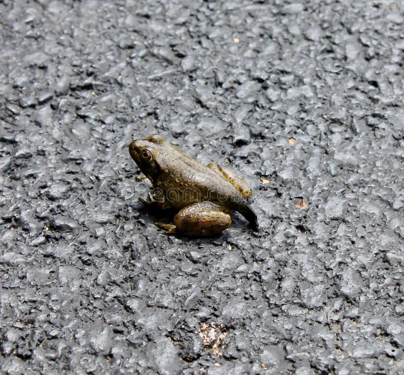 Kostenlos frosch bilder ▷ Frosch: