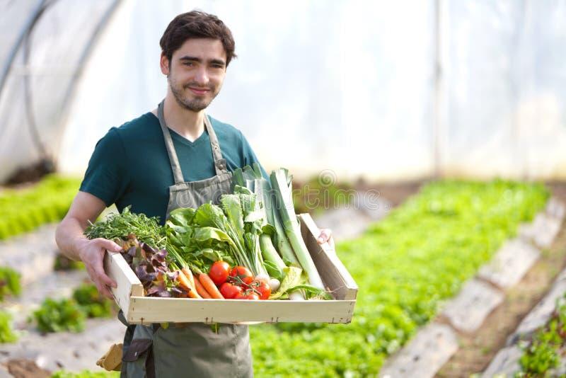 Junger glücklicher Landwirt mit einer Kiste voll vom Gemüse stockfoto