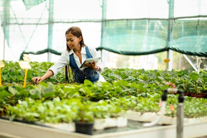 Junger hübscher Asiatinagronom mit der Tablette, die im Gewächshaus kontrolliert die Anlagen arbeitet lizenzfreie stockfotos