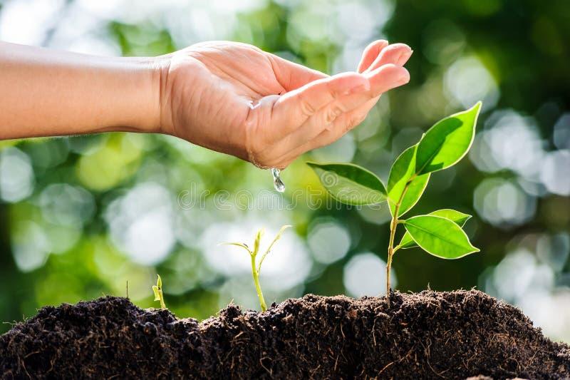 Junger Handwassertropfen auf der Grünpflanze, die auf Boden wächst lizenzfreie stockfotos