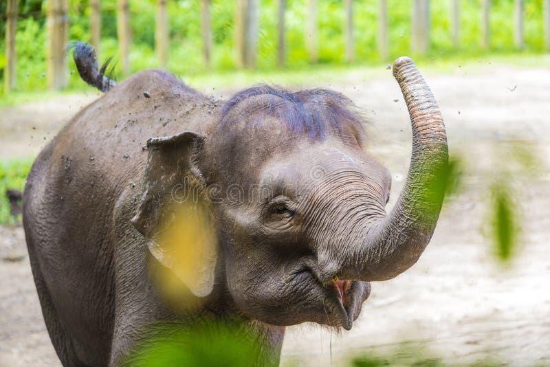 Junger indischer Elefant stockfoto