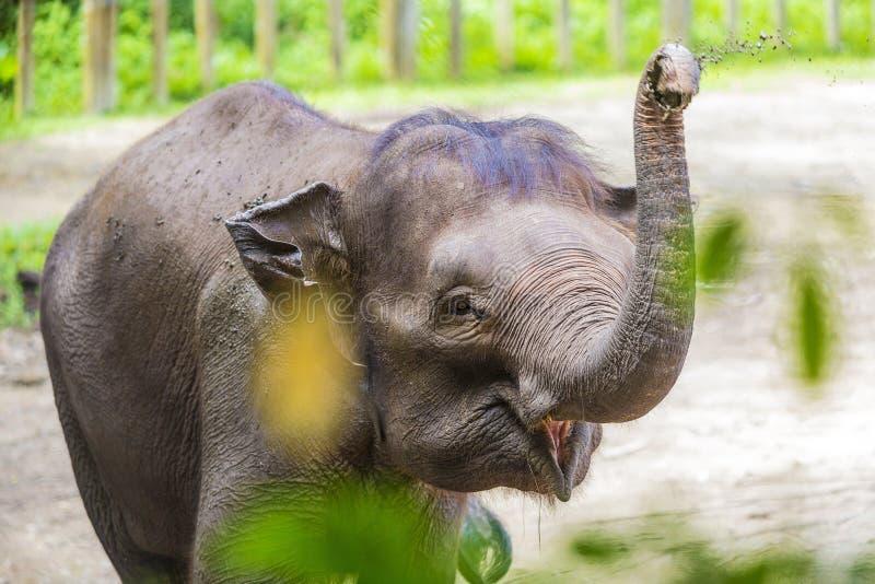 Junger indischer Elefant stockfotografie