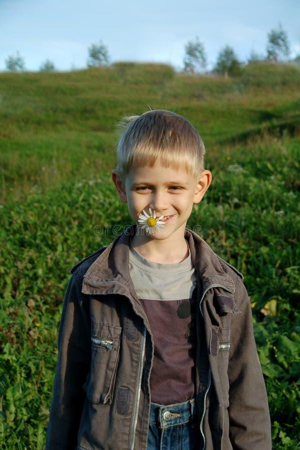 Junger Junge mit Gänseblümchen lizenzfreies stockfoto