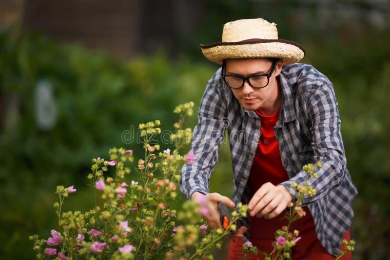 Junger Kerlgärtner im Strohhut schnitt die Büsche lizenzfreie stockfotos