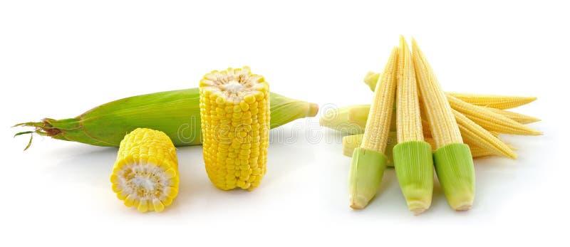 Junger kleiner Mais auf weißem Hintergrund stockbild