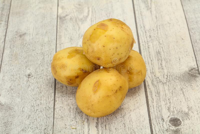 Junger kleiner Saisonkartoffelhaufen lizenzfreie stockfotos