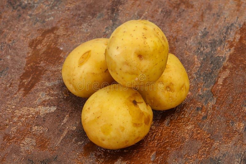 Junger kleiner Saisonkartoffelhaufen stockfotos