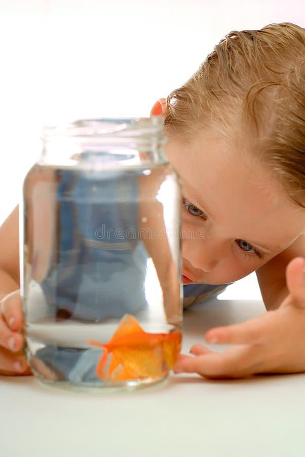 Junger Kleinkindjunge mit Goldfish stockfoto