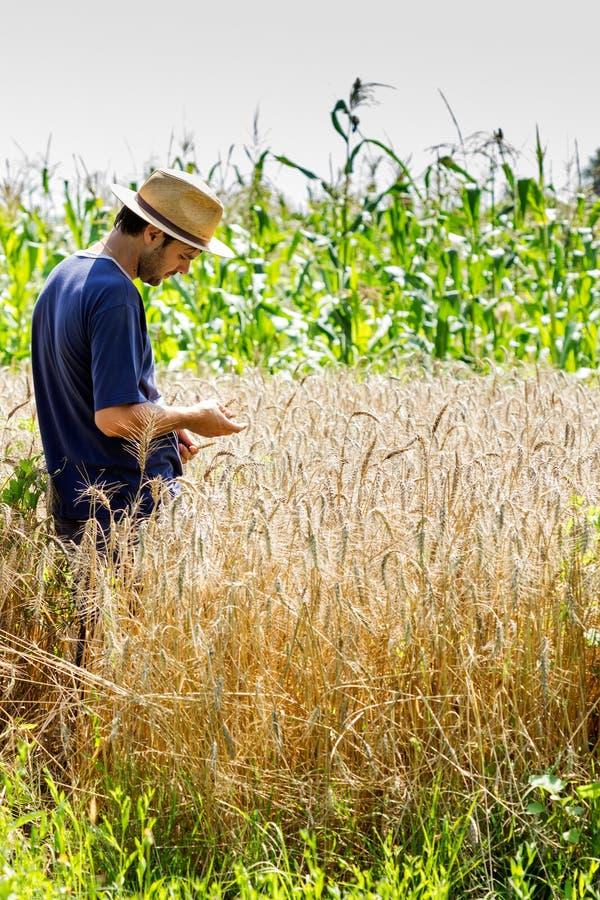 Junger Landwirt, der auf einem Weizengebiet steht lizenzfreie stockfotografie