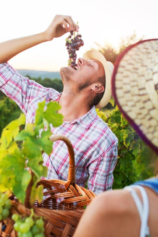 Junger Landwirt, der frische Trauben genießt lizenzfreie stockfotos