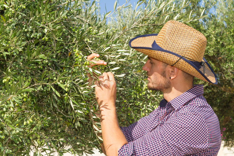 Junger Landwirt in der Olivenbaumwaldung lizenzfreies stockfoto
