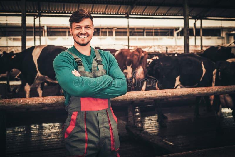 Junger Landwirt in einem Kuhstall auf einer Molkerei stockbilder