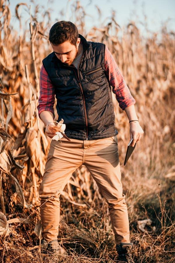 Junger männlicher gut aussehender Mann, Landwirt, der mit Tablette arbeitet und auf Maisernten erntet lizenzfreie stockfotografie