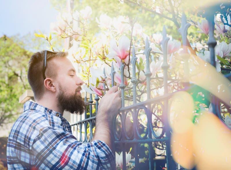 Junger Mann mit einem Bart und die Sonnenbrille, die Magnolie riecht, blüht hinter dem Zaun und schafft weichen Hintergrund der S lizenzfreie stockfotos