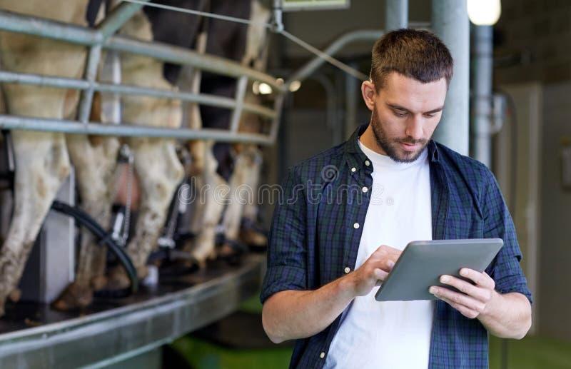 Junger Mann mit Tabletten-PC und -kühen auf Molkerei stockbild