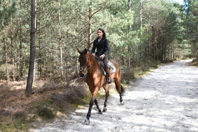 Junger Reiter im Wald stockbilder