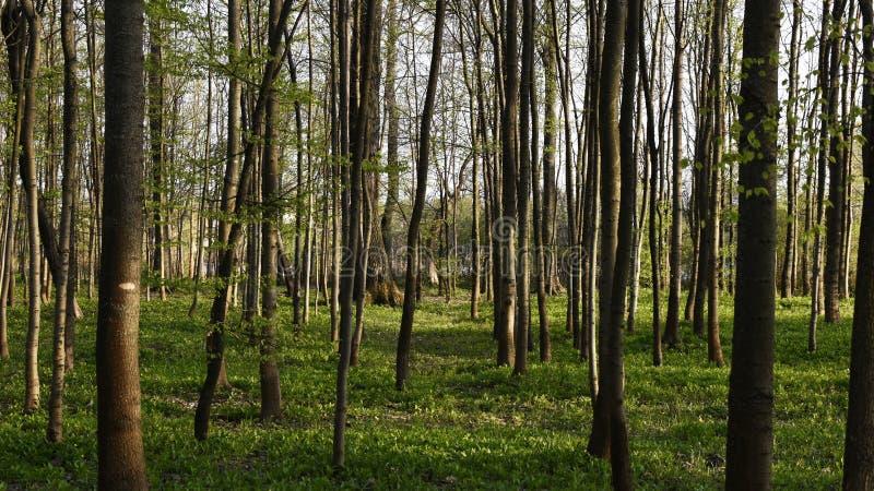 Junger Wald der jungen Bäume lizenzfreie stockfotografie