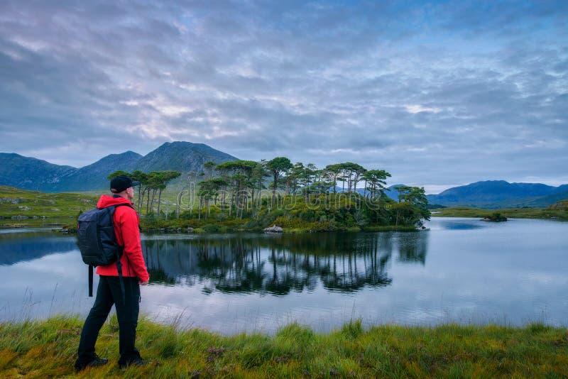 Junger Wanderer in der Kiefern-Insel in Derryclare-Lough lizenzfreie stockfotos