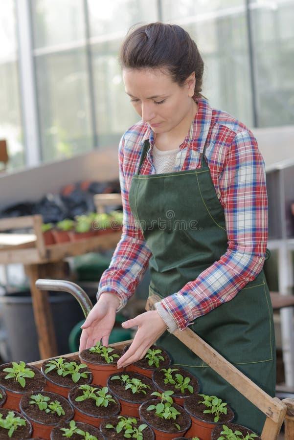 Junger weiblicher Gärtner, der Tag im Gewächshaus genießt stockbild