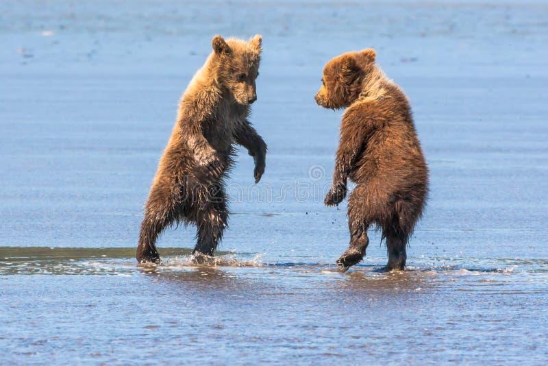 Junges Bärenjungs-Spielen stockbild