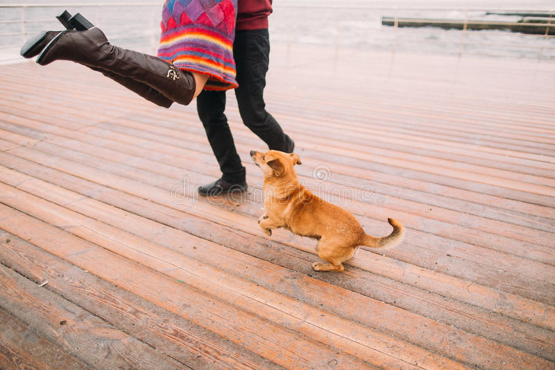 Junges glückliches Paar, das mit Hund geht und Spaß auf dem regnerischen Liegeplatz im Herbst hat Sun-Strahl in den Fjorden stockfotos