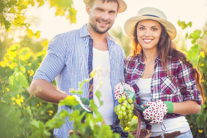 Junges glückliches Paar von Weinzüchtern lizenzfreies stockbild