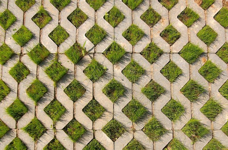 Junges grünes Gras wächst vom konkreten structur lizenzfreies stockfoto