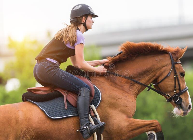 Junges hübsches Mädchen, das ein Pferd mit hintergrundbeleuchteten Blättern hinten in s reitet stockfotografie