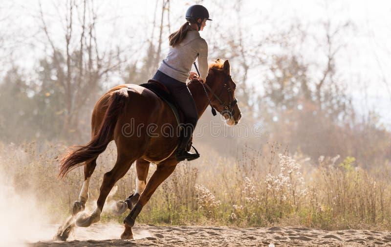 Junges hübsches Mädchen - ein Pferd mit hintergrundbeleuchteten Blättern hinten reiten stockbild