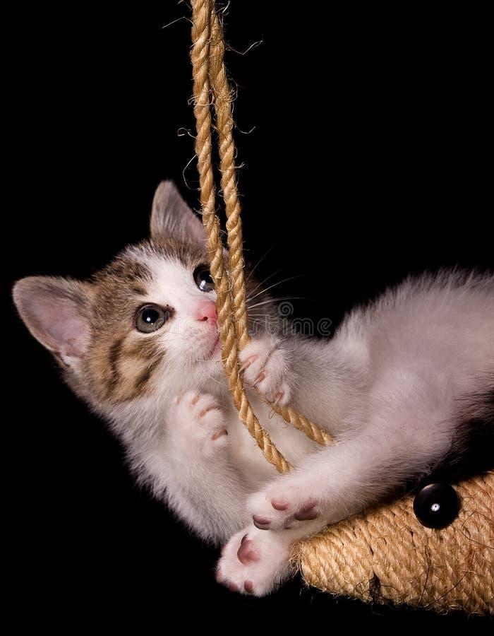 Junges Kätzchen lizenzfreies stockbild