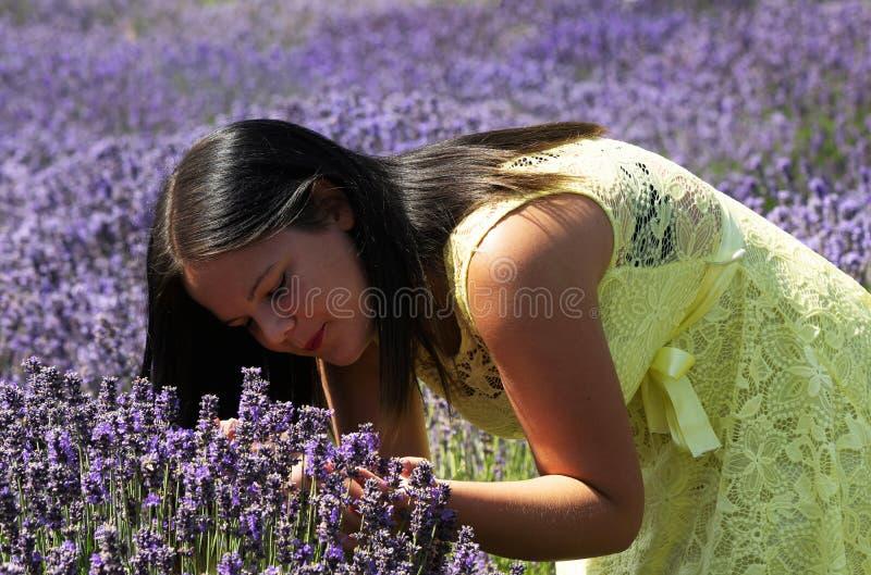 Junges Mädchen auf dem Lavendelgebiet stockfoto