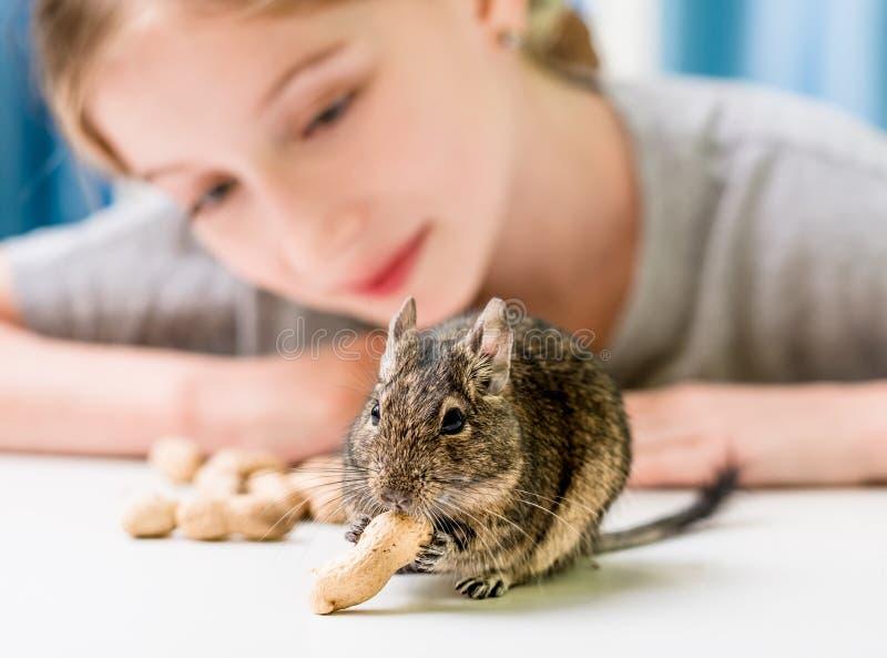 Junges Mädchen beobachten das degu Eichhörnchen lizenzfreie stockfotos