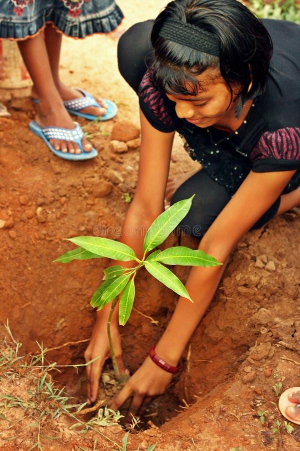 Junges Mädchen, das Baum pflanzt lizenzfreies stockfoto