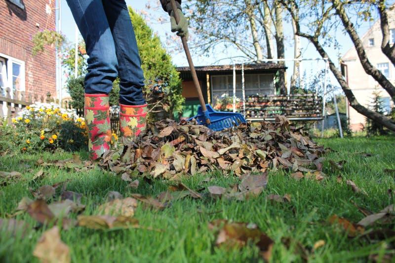 Junges Mädchen, das Blätter im Garten harkt lizenzfreie stockfotografie
