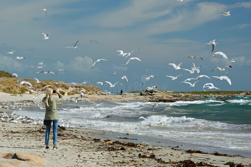 Junges Mädchen, das die Vögel fotografiert lizenzfreies stockfoto