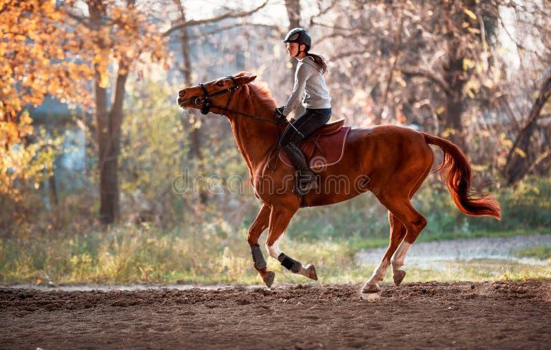 Junges Mädchen, das ein Pferd reitet stockbilder