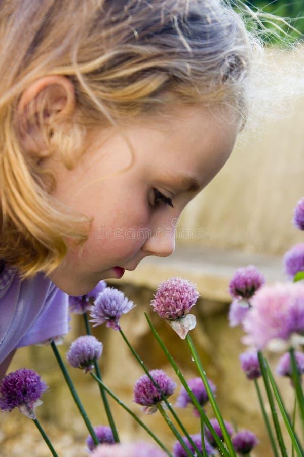 Junges Mädchen, das purpurrote Blumen riecht. lizenzfreies stockbild