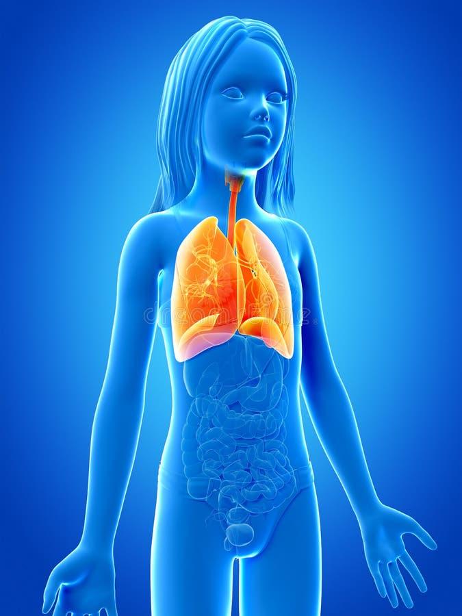 Junges Mädchen - die Lunge stock abbildung