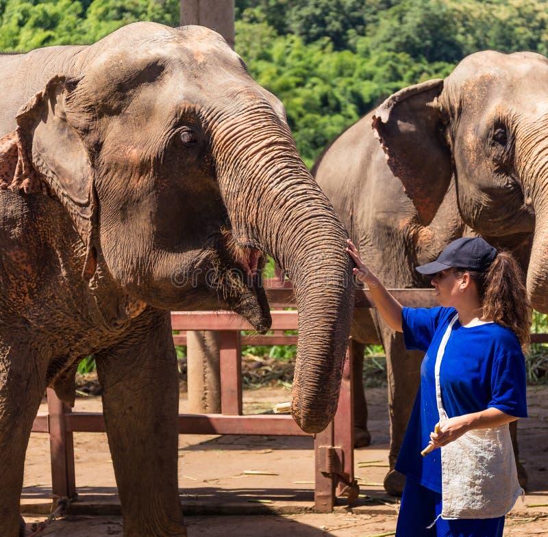 Junges Mädchen kümmert sich um Elefanten an einem Schongebiet im Dschungel von Chiang Mai lizenzfreies stockbild