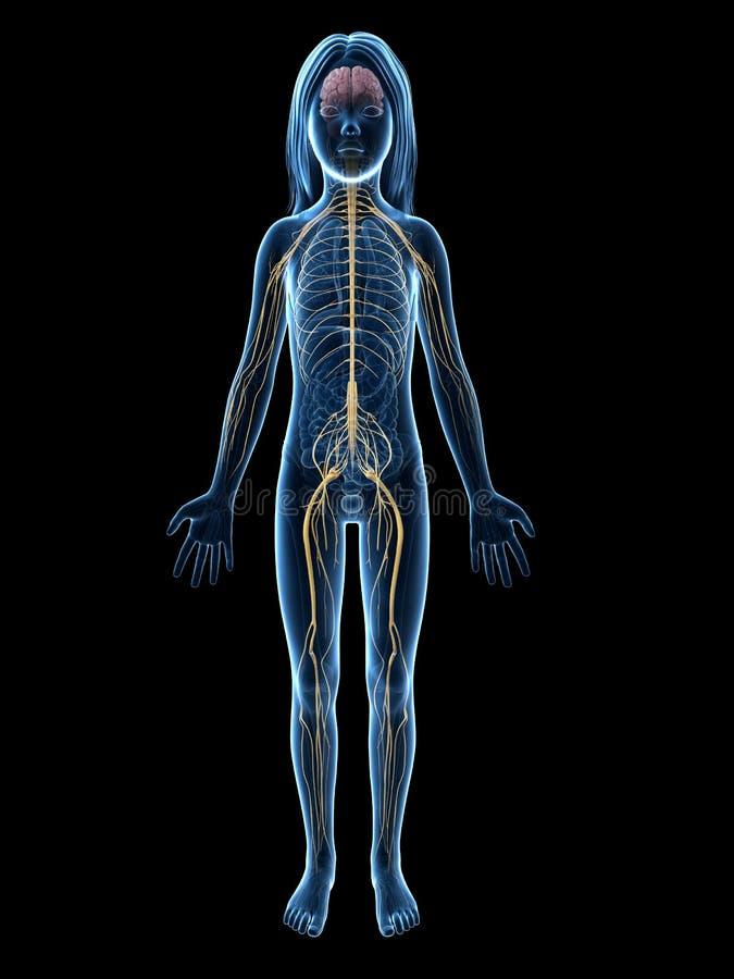 Junges Mädchen - Nervensystem lizenzfreie abbildung